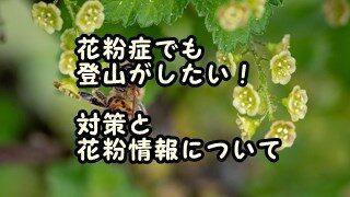花粉症でも登山がしたい!対策と花粉情報について